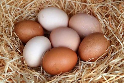 Chicken Eggs- 1 dozen