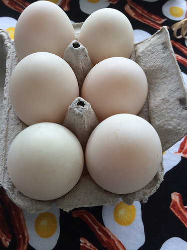 Duck Eggs- 1 dozen
