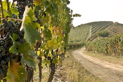 Degustazione Vini e Visita guidata