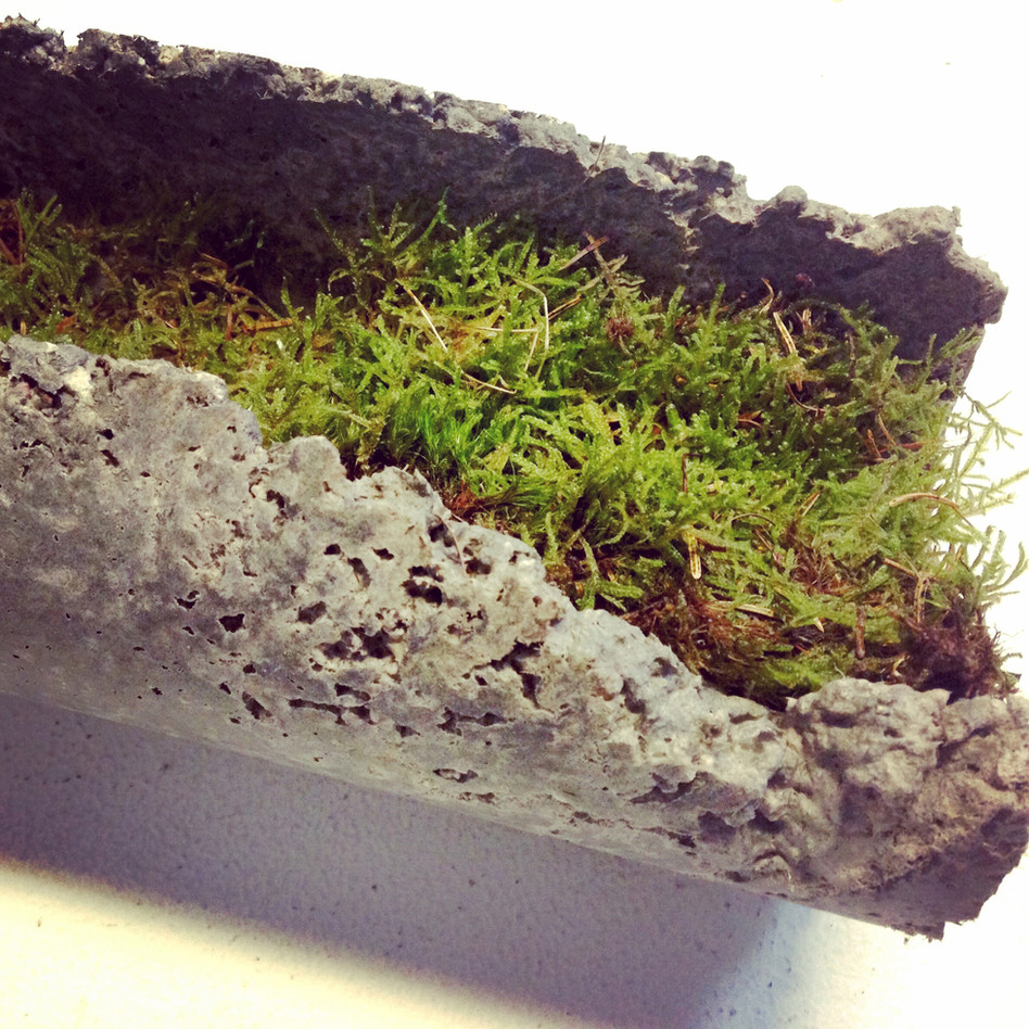 Study, 2017, Moss contained