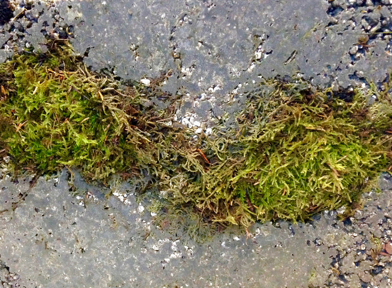 Study, 2017, Moss river within concrete