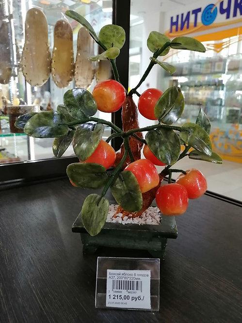 Бонсай яблоко 8 плодов