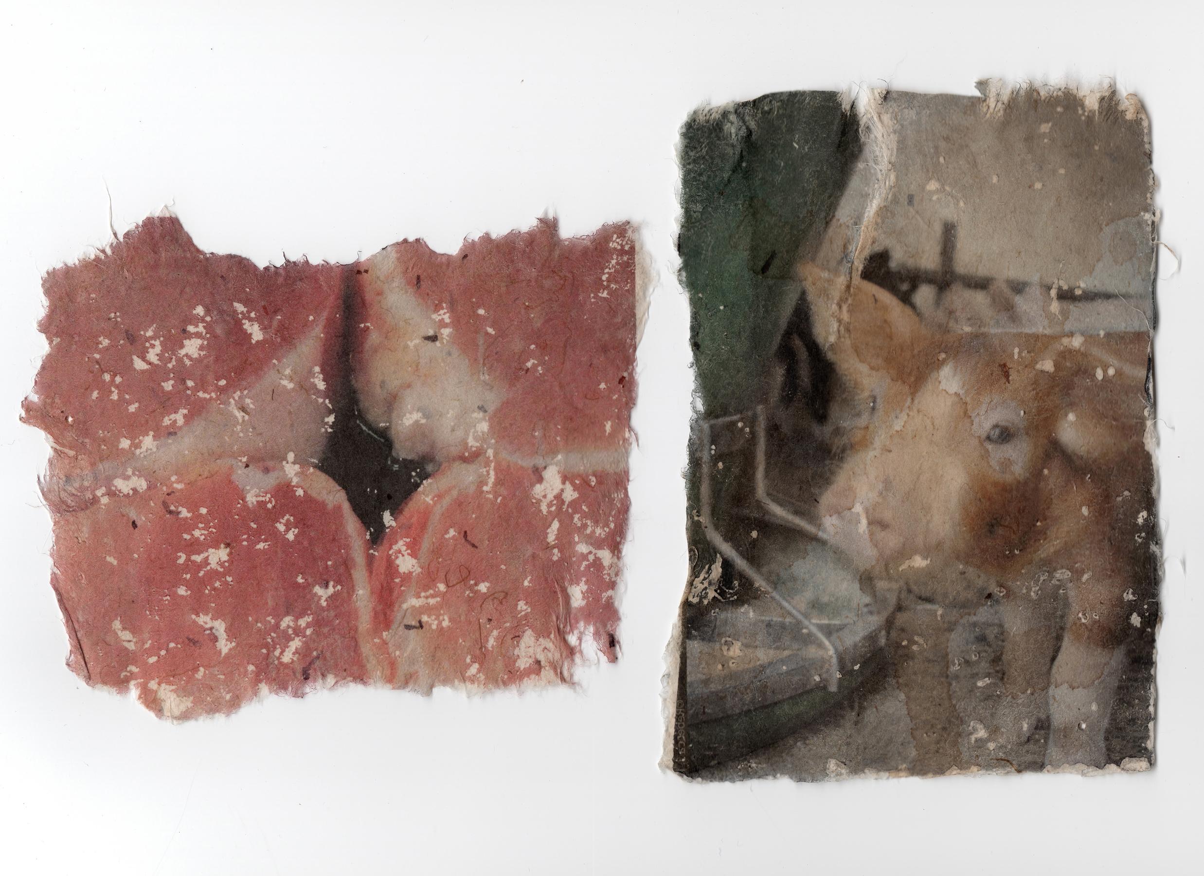 Pork Source Rebecca J Hopp.JPG