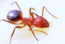 animal-ant-bug-40825.jpg