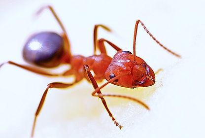 animal-ant-bug-40825.jpg