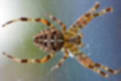 arachnid-closeup-insect-51394.jpg