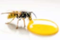 animal-antenna-bee-1313054.jpg