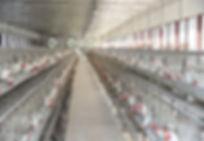 1499551553rsz_breeder_farm.jpg