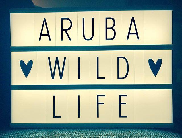 Aruba Wild Life Concepting