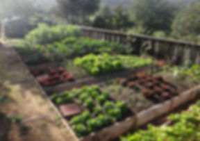 organicfarming.JPG