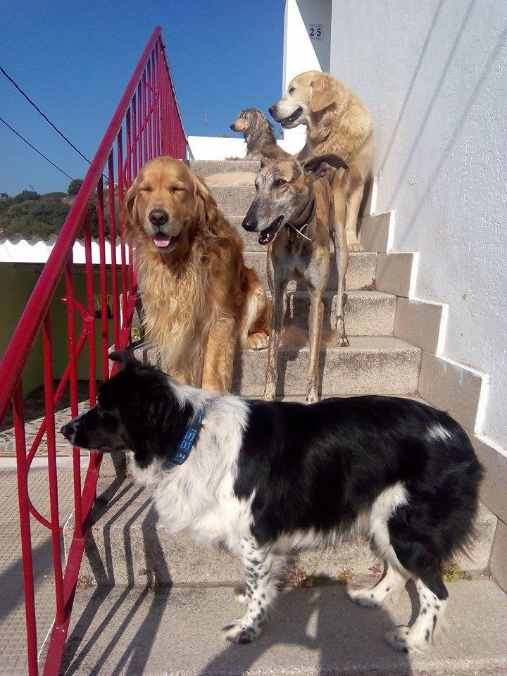En nuestra escalera al sol
