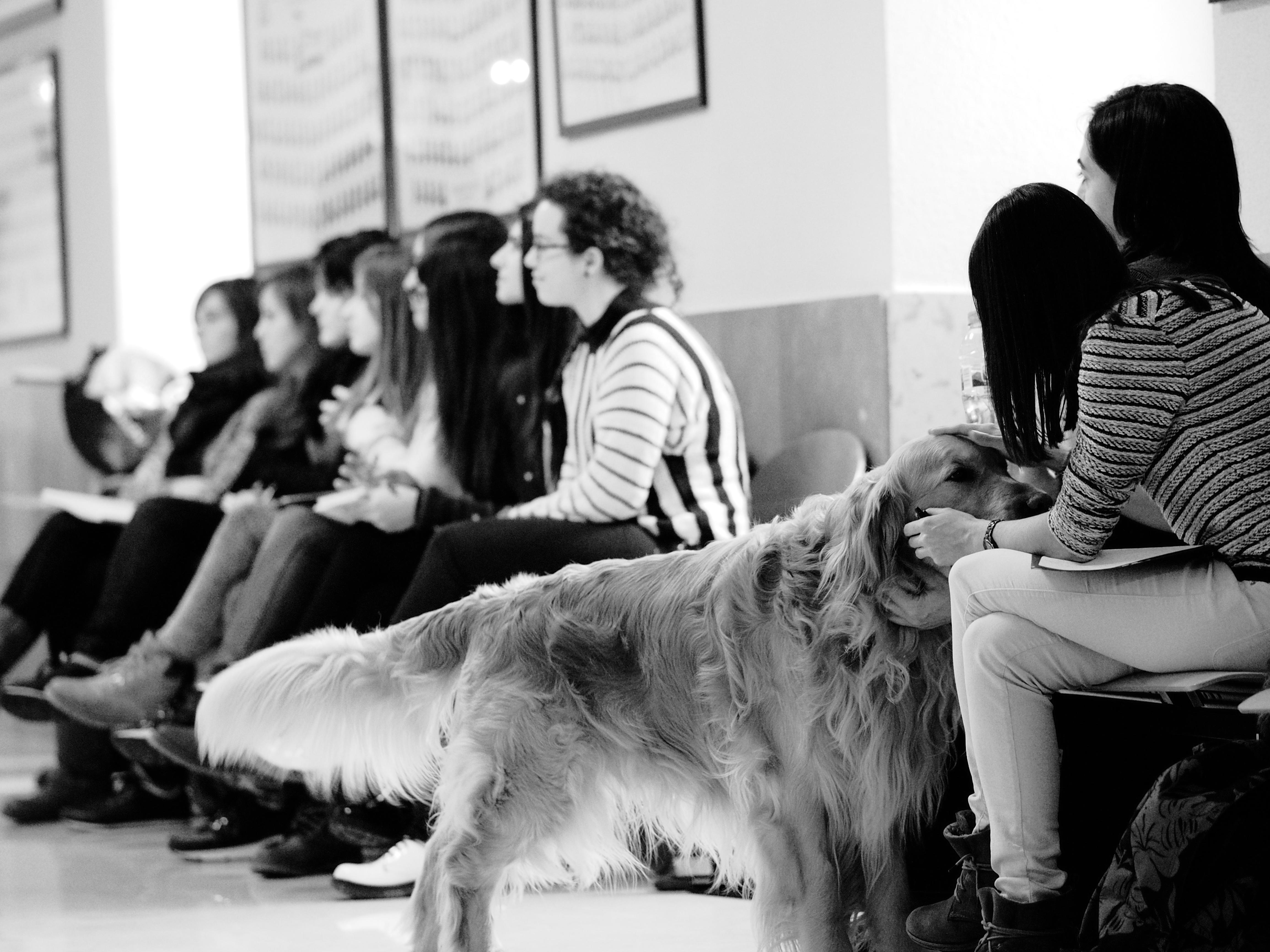 Perros de Apoyo Educativo
