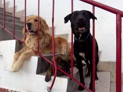 Roko, Ancla y Penny