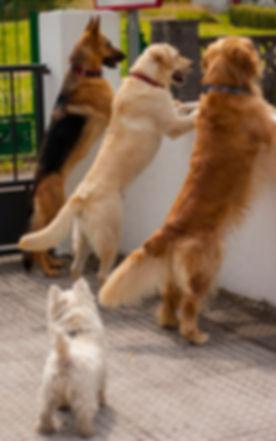Educación Canina Asturias