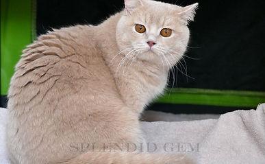 Isabella Splendid Gem