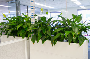 Palmistree Tambour Plant unit