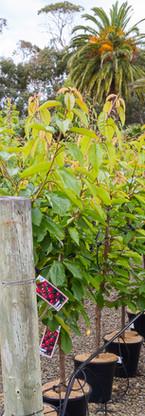 Westland Nurseries-345.jpg