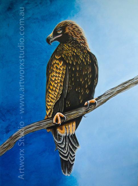 Wedgetailed Eagle-300.jpg