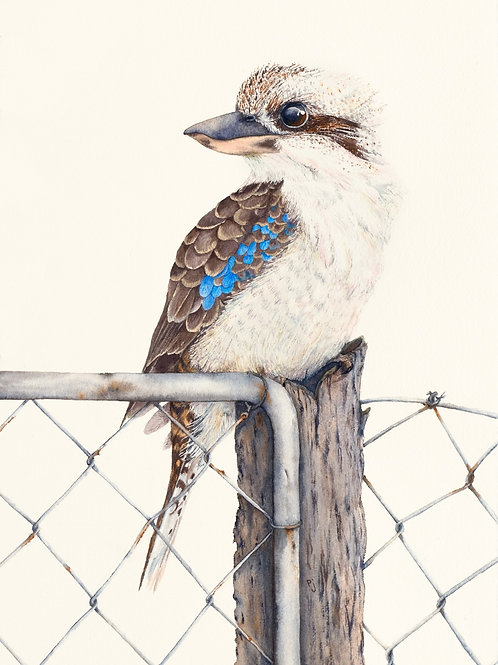 Sitting on the Fence A3 Print