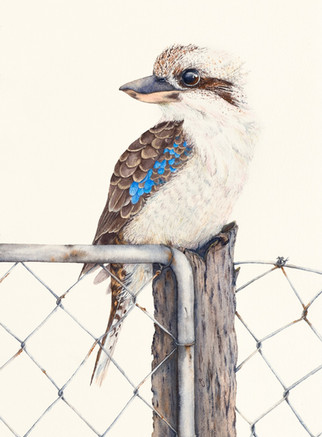 Sitting on the fence.jpg