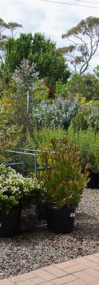 Westland Nurseries-329.jpg