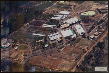 Westland Nurseries AerialsWEB-103.jpg