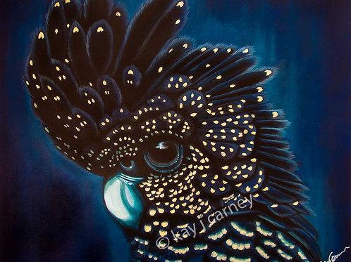 Black Cockatoo A2 Print