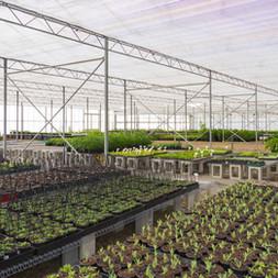 Westland Nurseries-164.jpg