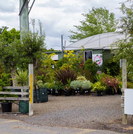 Westland Nurseries-297.jpg