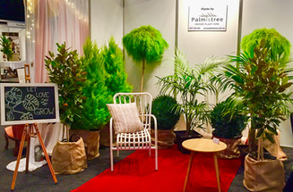 Palmistree Pure Bride Expo