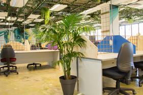 Palmistree Office Plants
