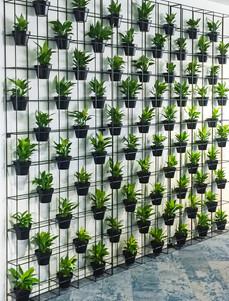 Palmistree Plant Wall