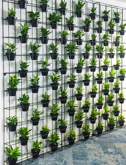 Palmistree Plant Wall