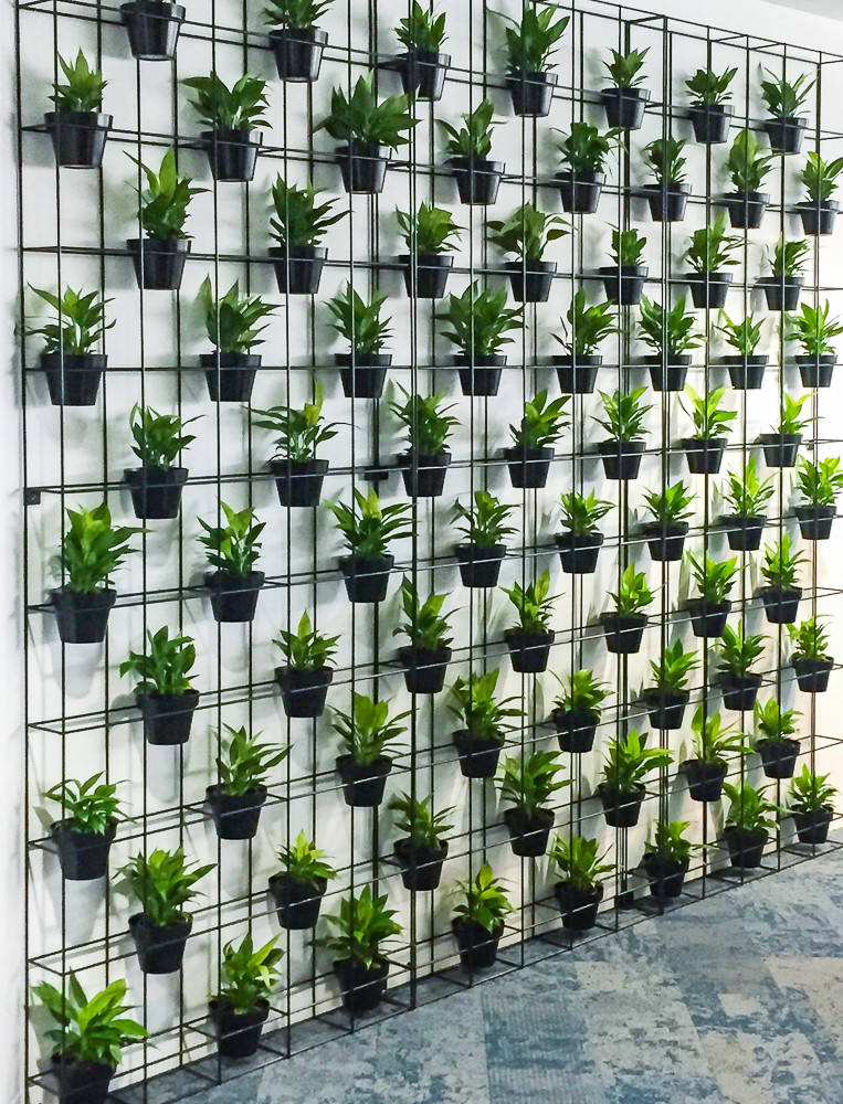 This is a plant wall