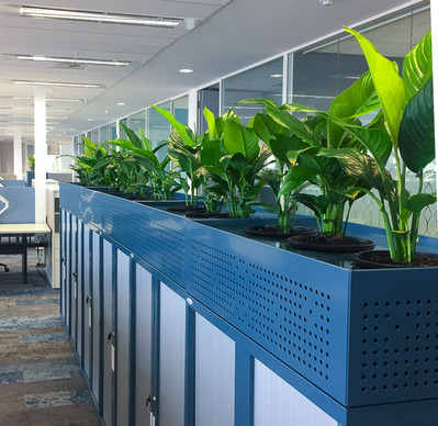 Palmistree Tambour plant units