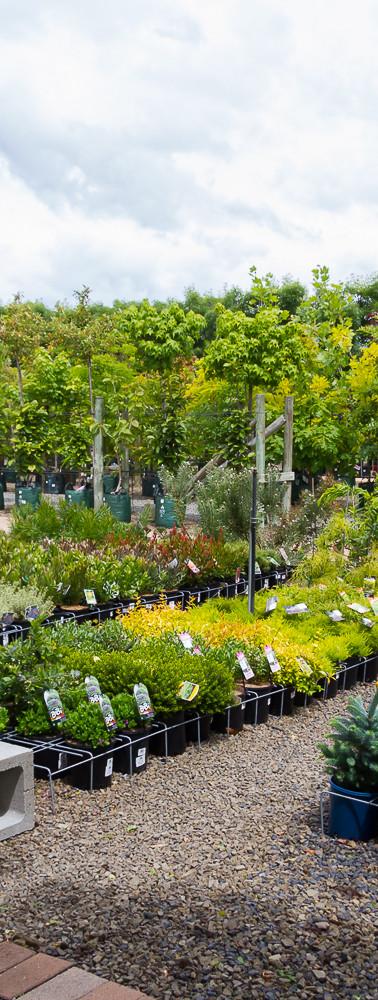 Westland Nurseries-330.jpg