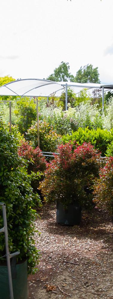 Westland Nurseries-338.jpg