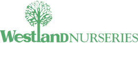 WN-Logo-TopLeft-Green-Tree.png