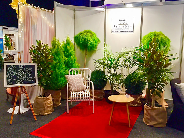 Palmistree Wedding Plant HIre