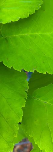 Westland Nurseries WEB-421.jpg
