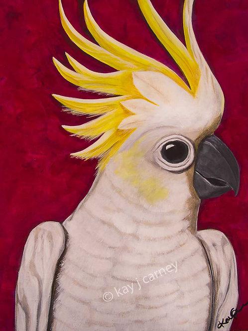 Sulphur Crested Cockatoo A3 Print