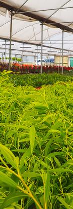 Plants-133.jpg
