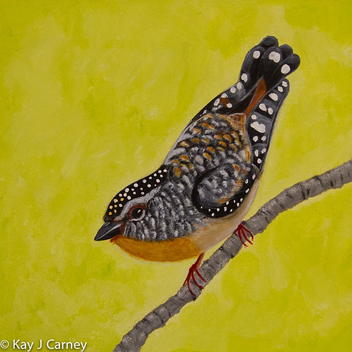 Forty-spotted Pardelote