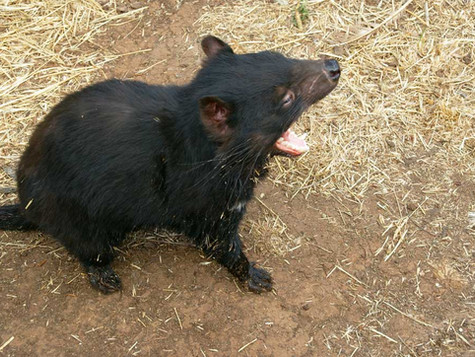 Tasmania's Wildlife
