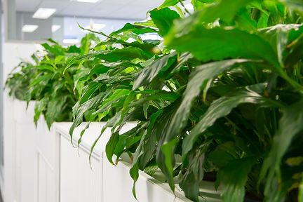 Palmistree Plant Maintenance