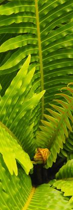 Plants-165.jpg