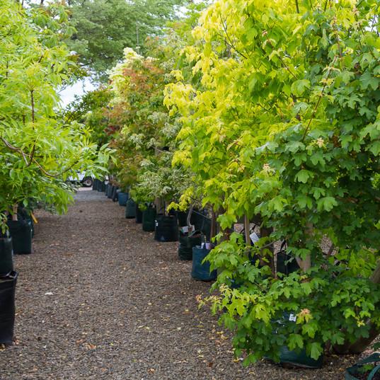 Westland Nurseries-350.jpg