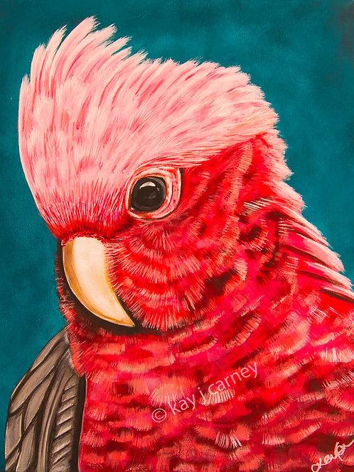 Pink Galah A2 Print