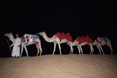 Camel Rides in Dubai Dunes