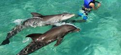 promo-private-island-dolphin-swim-and-beach-day-nassau-the-bahamas-5